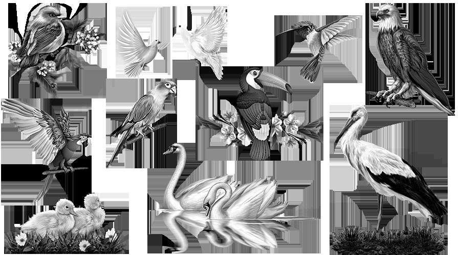 Birds preparation for engraving